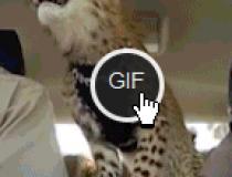 gifplayer