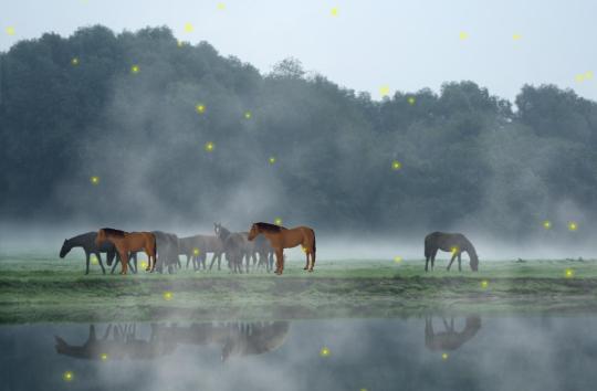 animal-wildlife-animated-wallpaper_2_11823.jpg