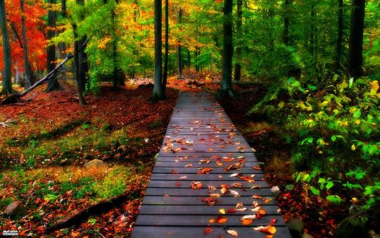Autumn Leaves Windows Theme