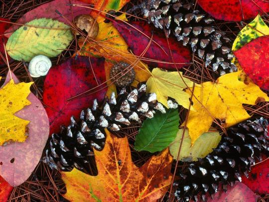 autumn-leaves-windows-theme_1_11840.jpg