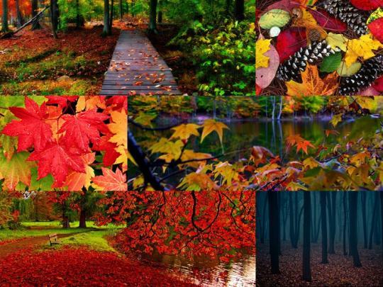 autumn-leaves-windows-theme_2_11840.jpg