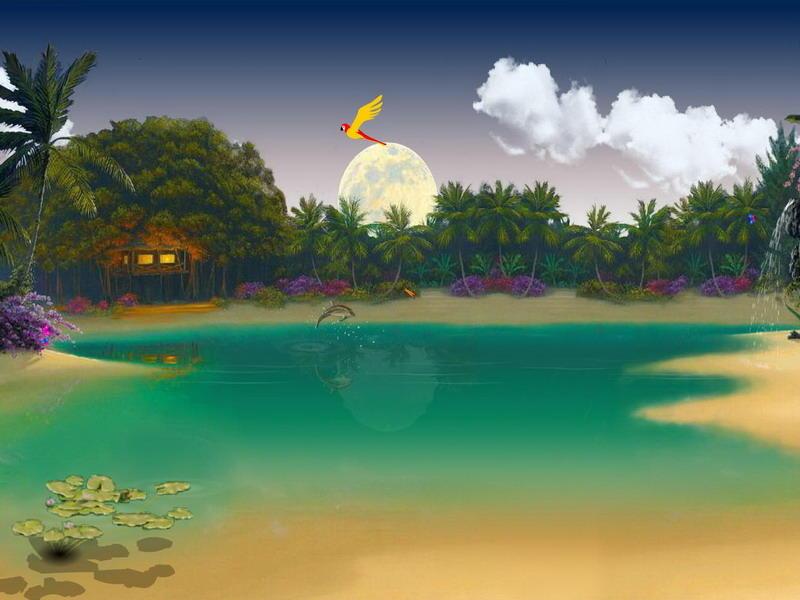 Bewitching Tropics