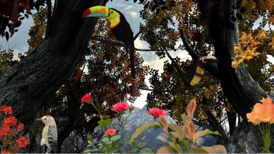Birds of Nature 3D