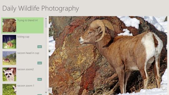 Daily Wildlife Photography