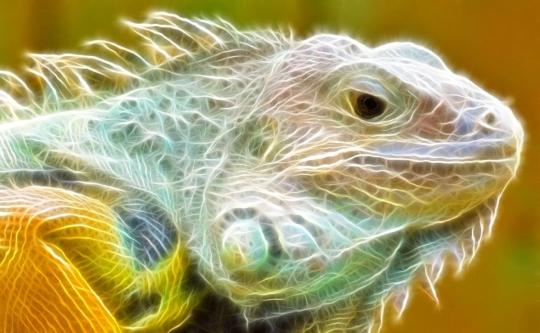 Digital Animal Screensaver