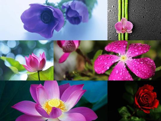 Flowers Windows Theme