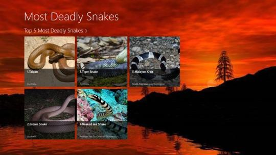 Most Deadly Snakes