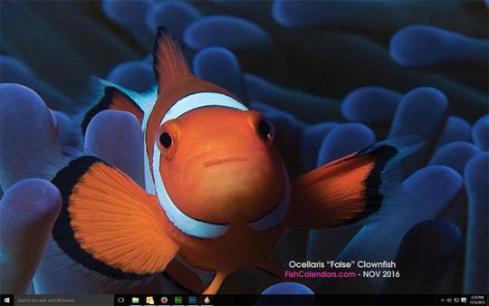 Ocean Treasures 2016
