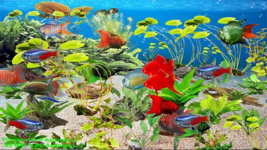 Paradise Fish Aquarium