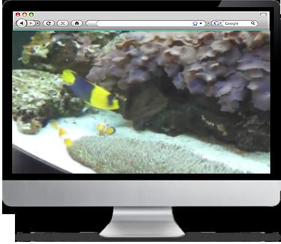 Real Life Finding Nemo Fishtank Screensaver