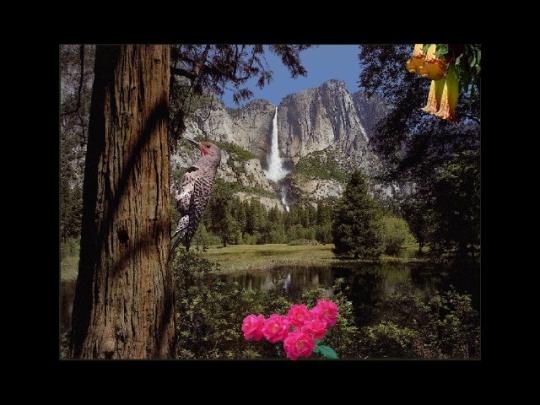 SkyLife Screen Saver