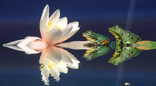 water-lily-screensaver_1_49773.jpg