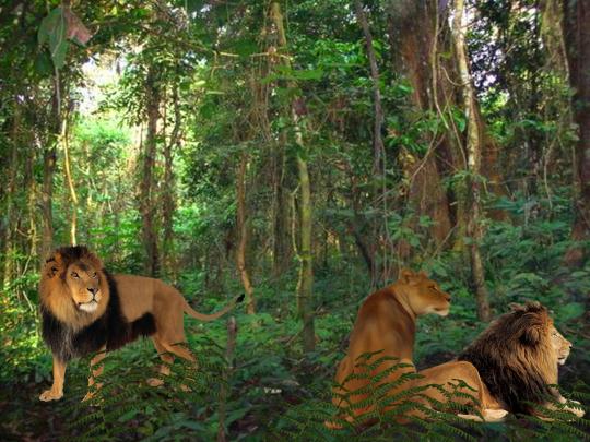Wild Kingdom Slide Show